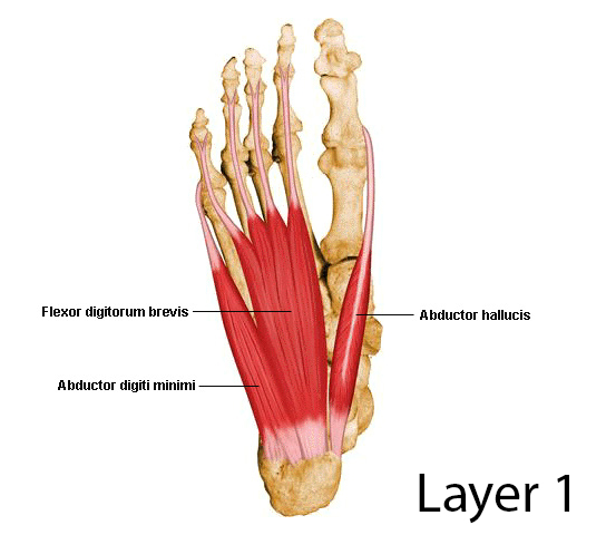 First Layer of the Plantar Aspect of the Foot